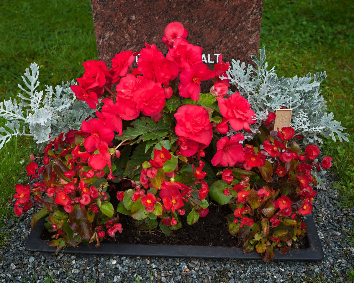 Sommerplanting på graven